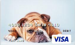 card dog